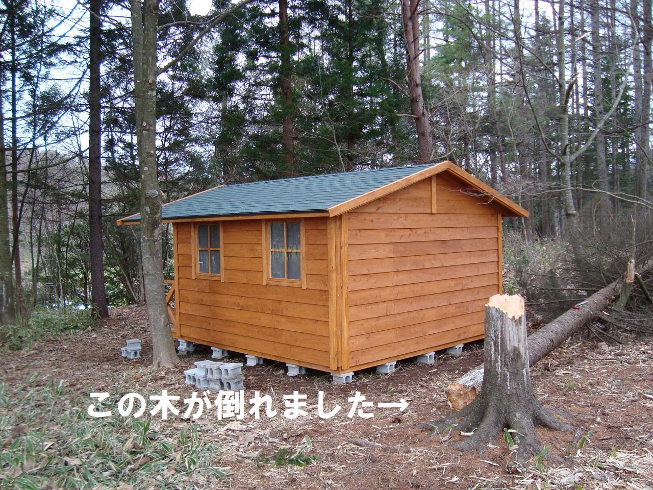 建築途中の小屋の横の木が倒れた
