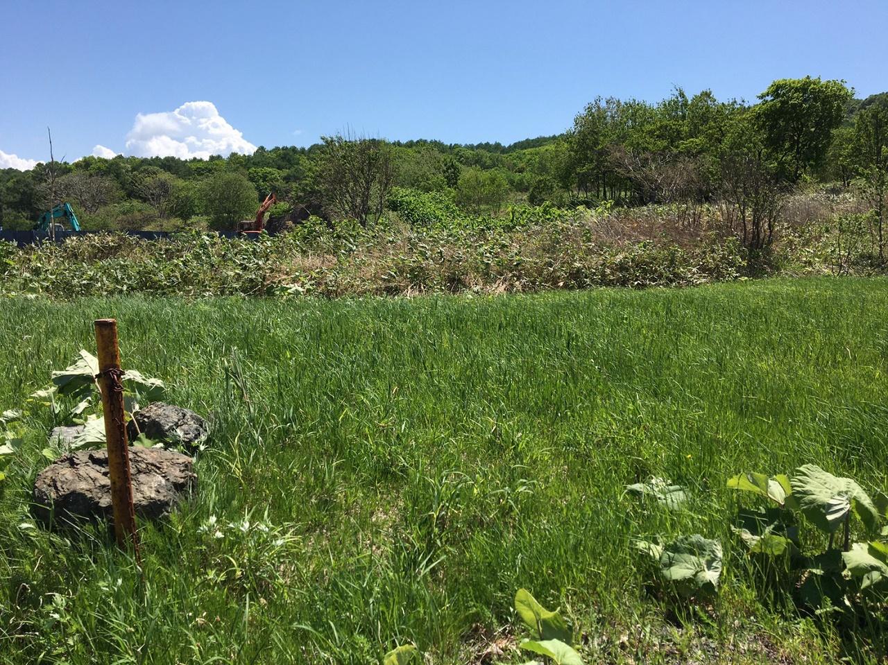 小屋を建てる場所は山林内