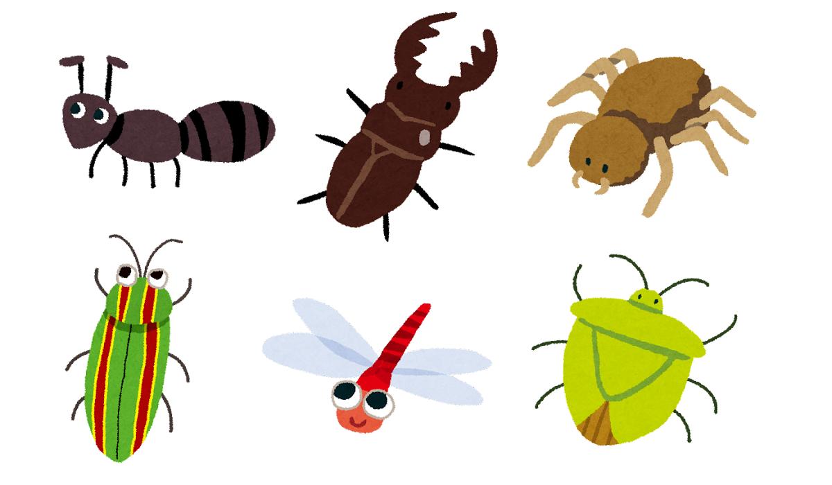 虫は木製小屋に必ず集まります。